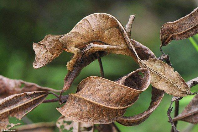 حشرة تشبه ورقة الشجر
