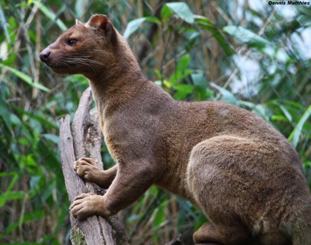 حيوانات استوائية فى غابات مدغشقر