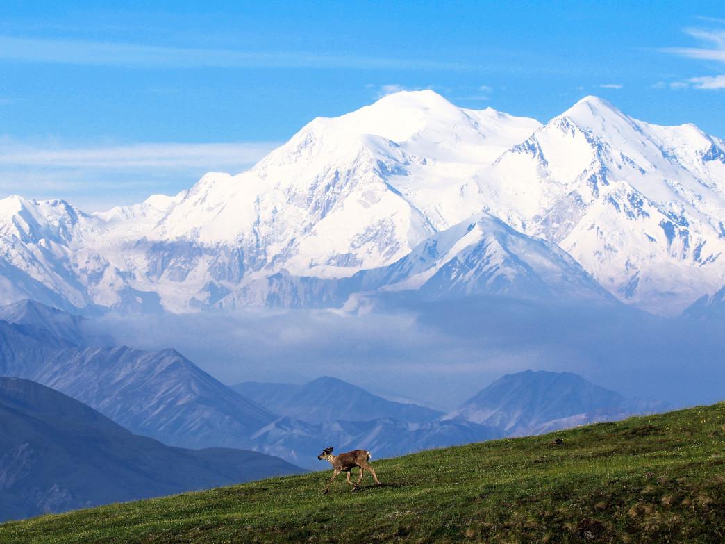 جبل دينالي