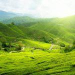 مرتفعات الكاميرون في ماليزيا الجنة الخضراء التي تستحق الزيارة