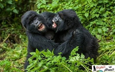 السياحة في رواندا