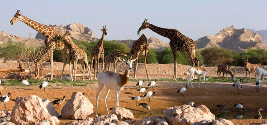 حديقة حيوان الإمارات تقدم عروضا خاصة وحصرية يوم الثلاثاء من كل